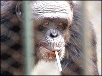¿ha visto a este mono?